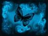 Cerulean Butterfly