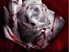 t0xic_rose