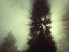 The Elder Pine