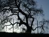Larae Meadows