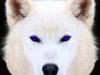 Serenity Wolf