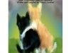 Tonya (the Night Writer)