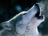 -WolfReaper (NERV)