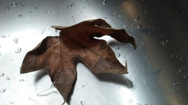 ...my first leaf of autumn