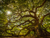 The Poet-Tree