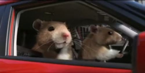 Enjoy your fly hamster ride. In my fast Kia,. Cause that's the