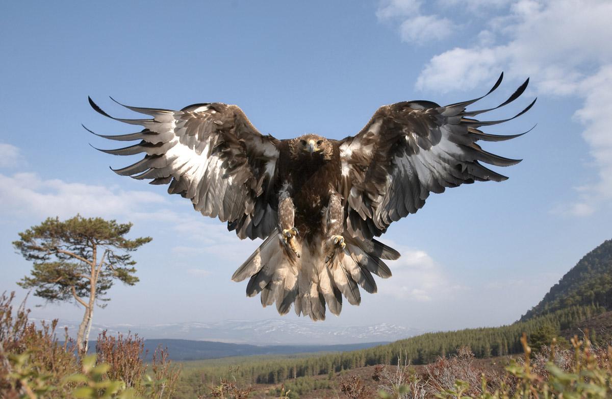 ted hughes hawk roosting essay