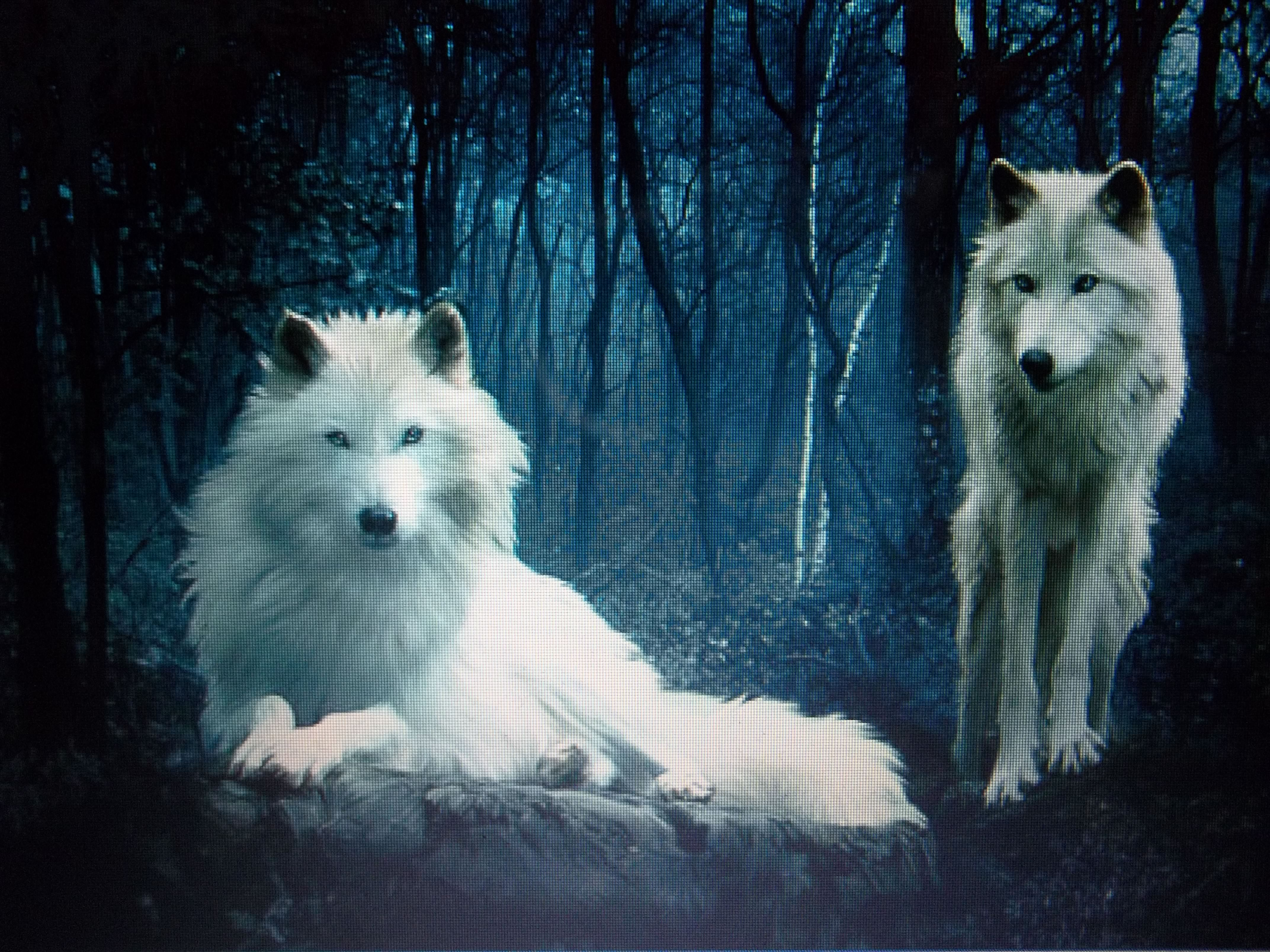 WHITE WOLVES: A brief tale | WritersCafe.org | The Online Writing ...