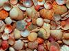 Under My Feet Lay Seashells