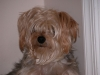 Sophie Dog