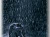 I waited in the RAIN!!