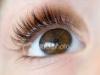 Chocolate Eyes