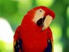 Foul Mouth Parrot