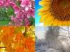 Seasons Past Sestina