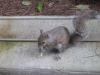 Happy The Squirrel