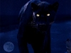 Panther's Shadowplay