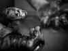 Return To Streetfighting 2: Horror Over Honor