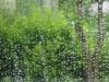 Through Raindrops