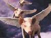 The Four Pigmen of the Aporkalypse