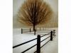I Walk Alone (Winter's Walk)