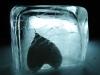 Frozen and Dead Heart