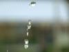 Poison Rain