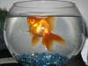 The Goldfish and Me