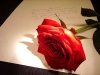 My letters to you...