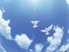 Las palomas vuelan