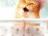 The Strange Case of McGuffin the Buttered Cat