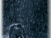 Tragedy of Rain...