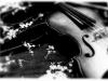 A Violin's Tears