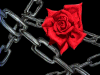 Chain of Roses