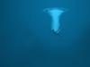 She Couldn't Swim