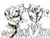 Tulip and Rose